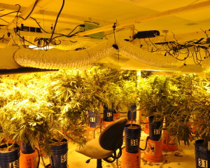 Police found a sophisticated marijuana-growing operation at the home of a West Vincent Township resident, said Chester County District Attorney Tom Hogan.
